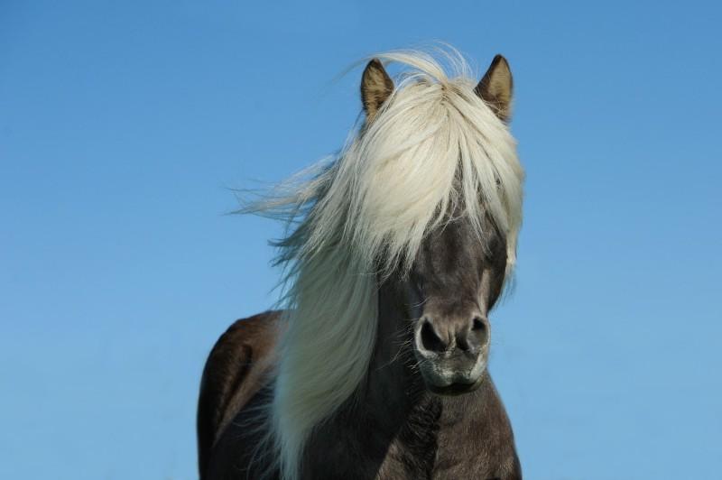 generichorse